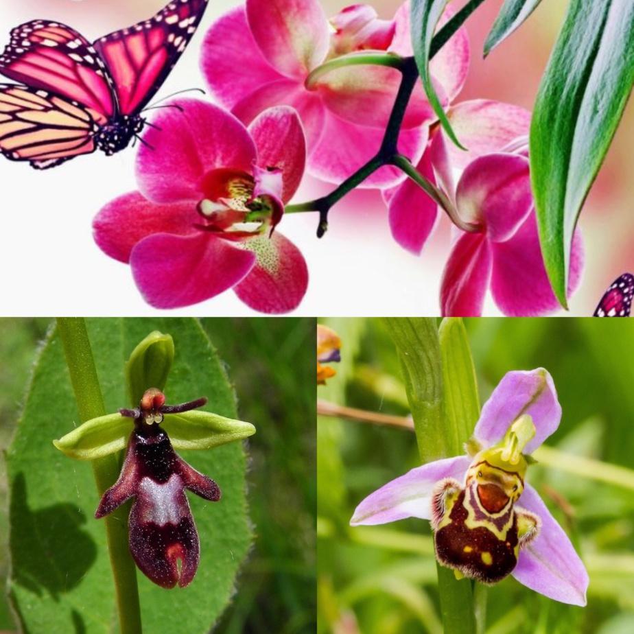Parfum d'orchidées