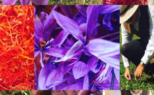 Le temps du Safran  Alors qu' au pied de l'Atlas marocain les feuilles mortes de Jacques Prévert  se ramassent à la pelle, les fleurs de safran se préparent à répéter en secret les derniers actes d'une chorégraphie haute en couleur.